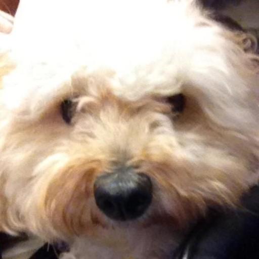Layla Belle NYC Shelter dog France expat